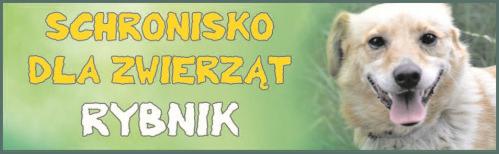 schronisko1.png