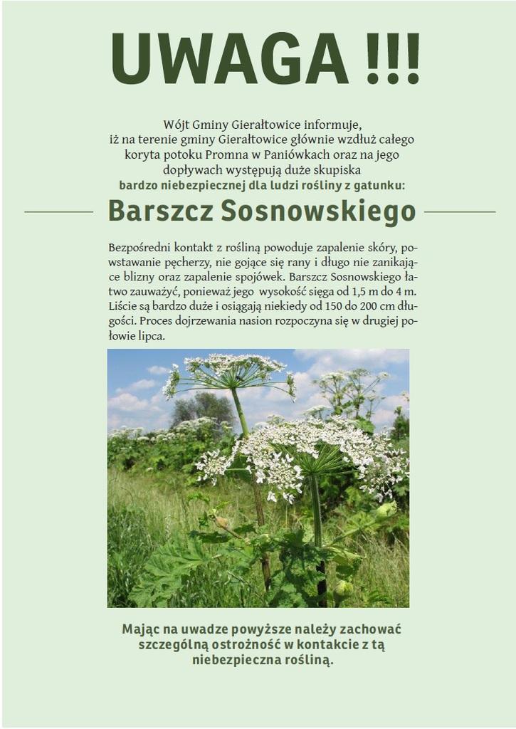 barszcz_sosnowskiego.jpeg
