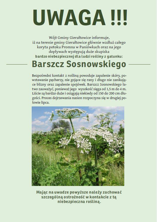 barszczsosnowskiego.jpeg