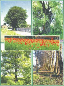 Przyszowice Przyszowickie drzewa